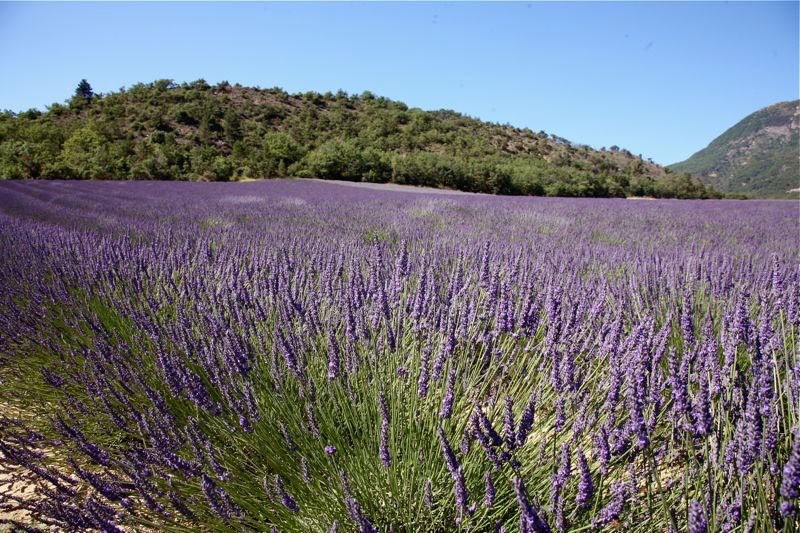 Lavendelfeld in voller bl te und im hintergrund die h gel for Haute kuki und die markise