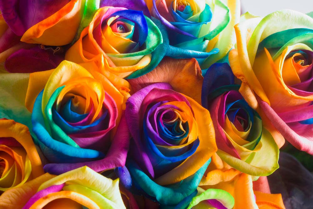 fotos von happy roses jetzt bei gartenposterde