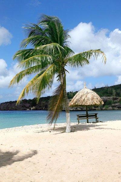 palmen am wei en strand mit sonnenschirm aus schilf. Black Bedroom Furniture Sets. Home Design Ideas