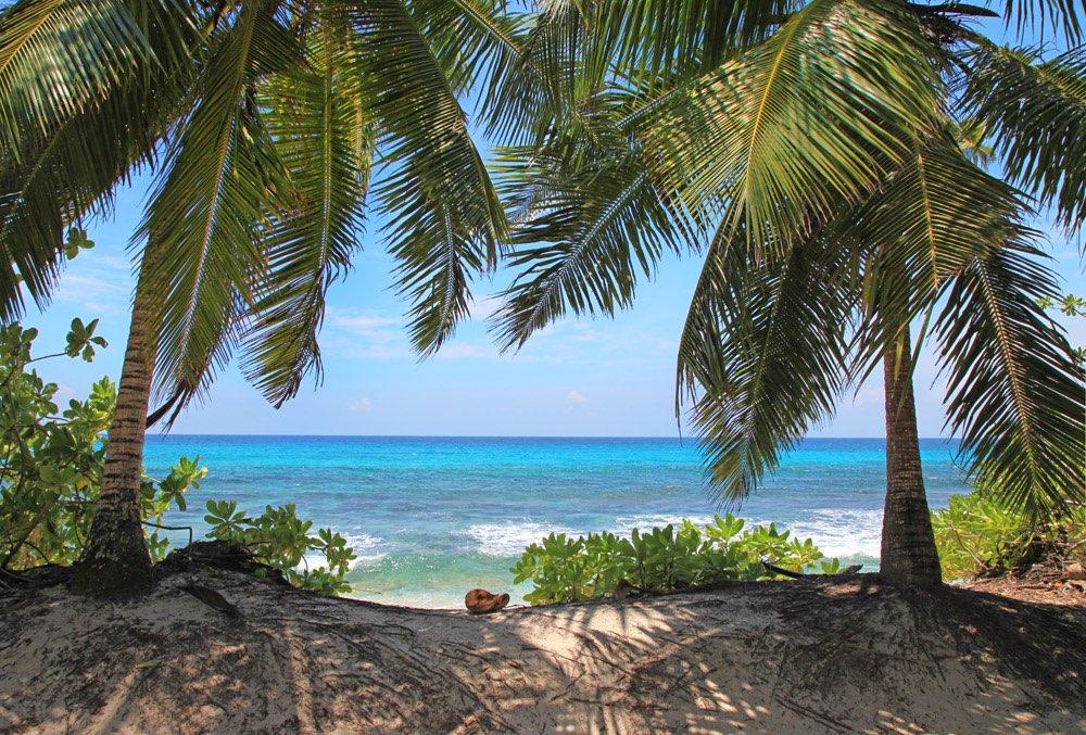 Die Schönste Palme Und Den Schönsten Strand Gibt Es Bei